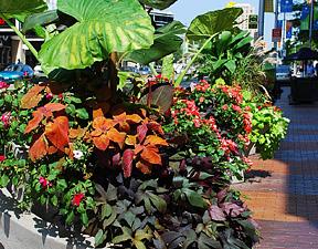 Planting jungle