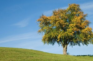 Single tree on horizon