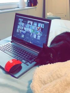 Image of a cat sitting next to a laptop computer